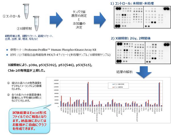 抗体アレイ受託解析サービス仕様(例)