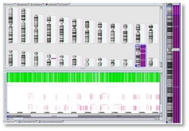 CytoScan 解析画像例